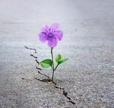 flower-through-the-crack-e1535130634263.jpg